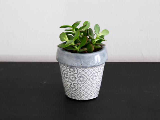 Houseplants | Jade Plant | Crassula ovata
