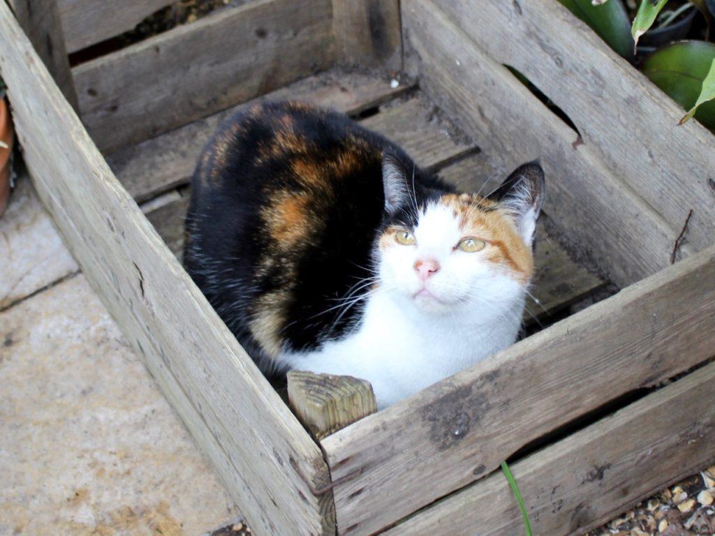 Top Five | Annie Cat