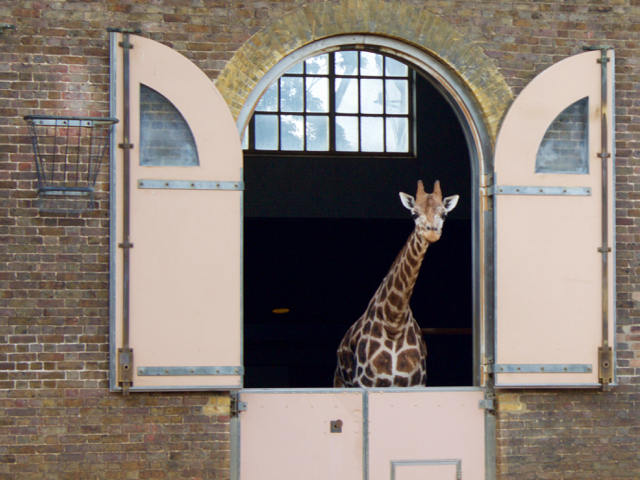 Top five | International Giraffe Day