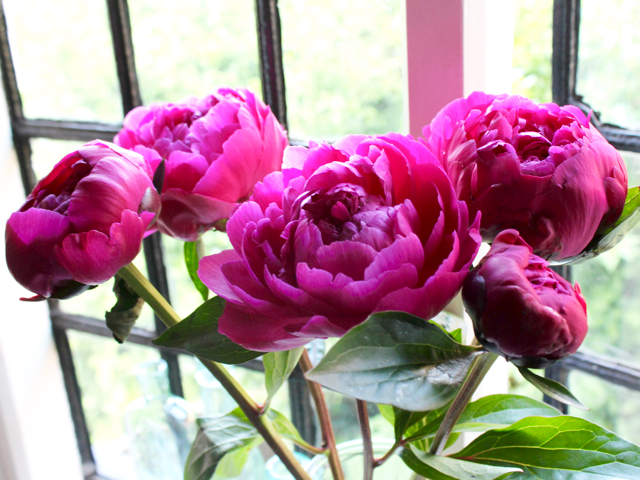 Top Five | Peonies