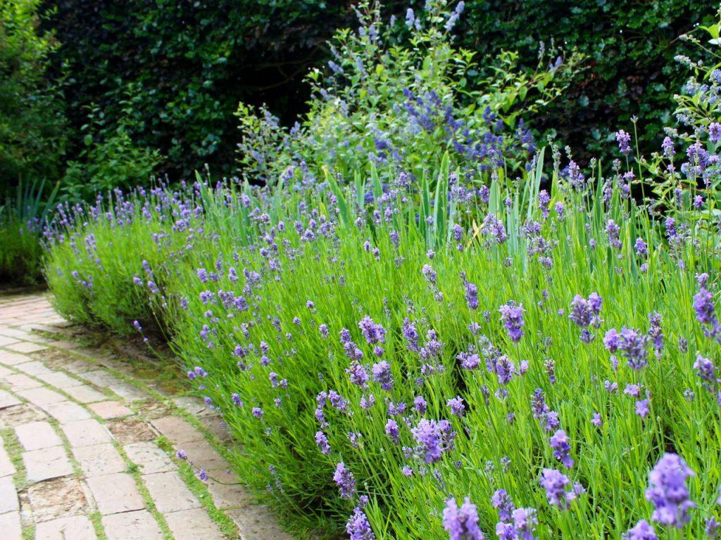 Hidcote Manor Garden 14