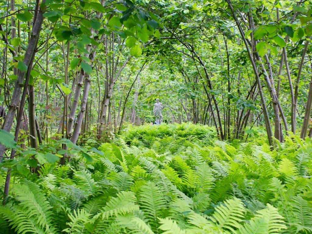 Sissinghurst Garden 8